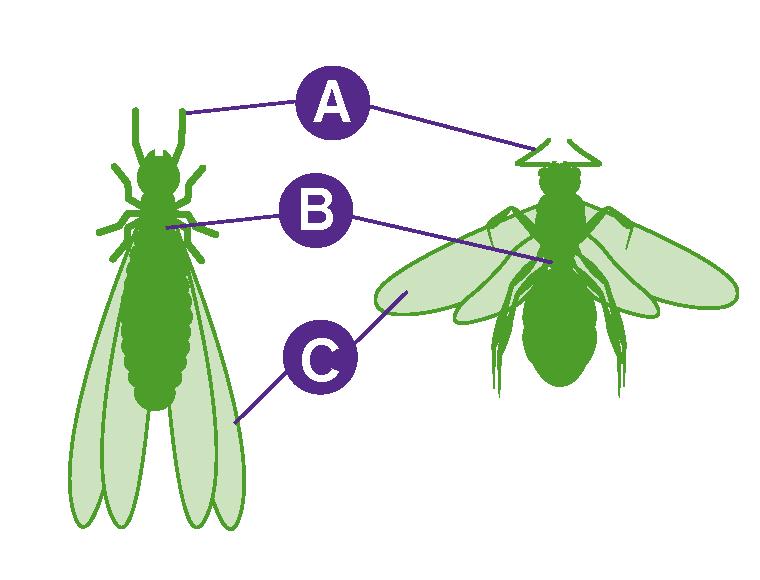 Ant-Termite Comparison